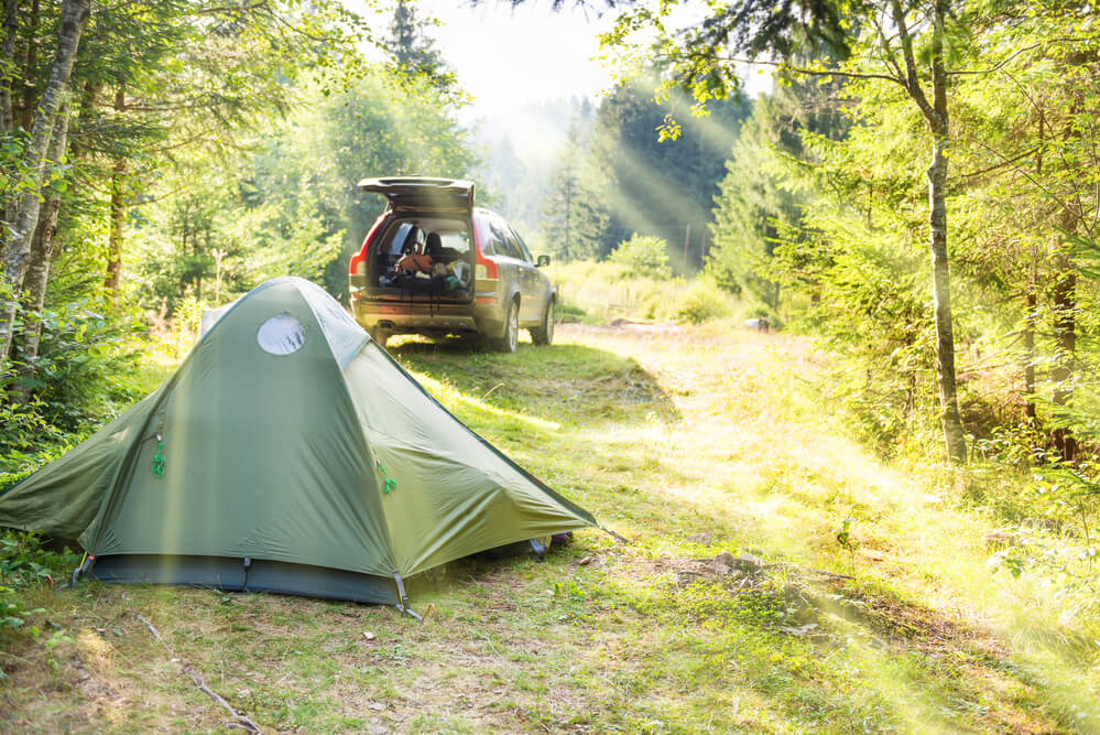 Cozy camping in fresh smelling tents